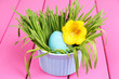 Easter egg in bowl with grass on pink wooden table close up
