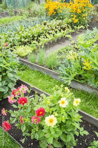 Foto Spatwand Dahlia Dahlias in a Vegetable Garden
