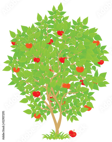Apple tree with red-ripe fruits