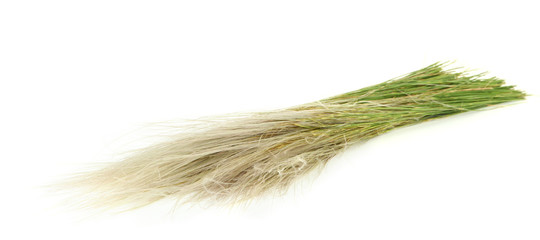 Feather Grass or Needle Grass, Nassella tenuissima isolated