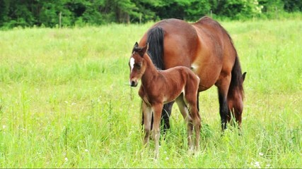 Little foal is standing next to its mother