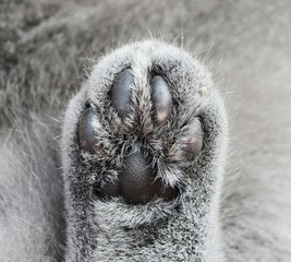 Cat paw detail