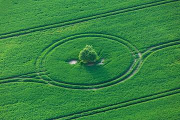 Fahrspuren im Getreidefeld um einen Baum