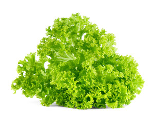 Fresh green lettuce salad isolated on white background.