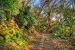Hiking Trail on Okinawa Island