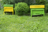 Yellow beehives