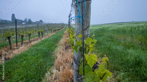 Swiss vineyard timelapse
