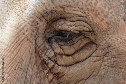 Fototapeten,elefant,afrika,tier,asien
