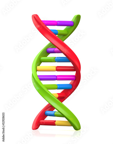 Colorful Dna Model