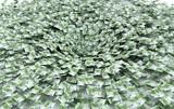 Crisi economica, truffa mondiale, banche, tracollo