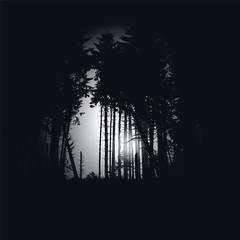 Fichtenwald bei Nacht