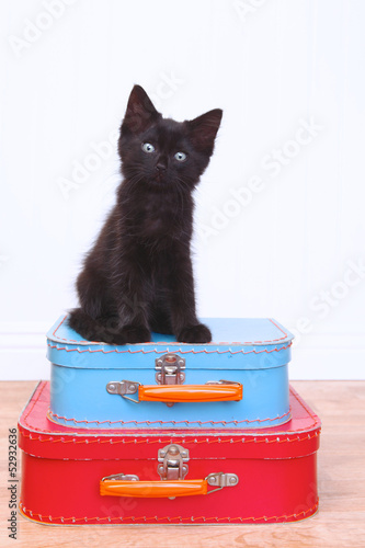 Black Kitten Sitting Atop Luggage on White