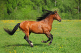 Beautiful sorrel horse