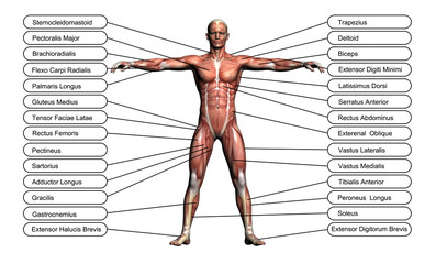 High resolution concept or conceptual 3D human anatomy