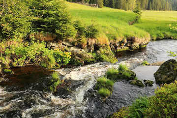 Creek from the green Wilderness in the spring Mountains, Czech