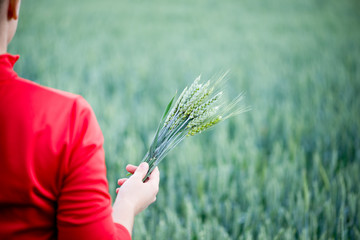 Wheat ears in the hands
