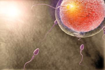 Fecundación óvulo