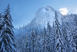 Snowy Evergreens Mountain Snoqualme Pass Washington
