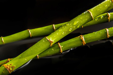 Bamboo drops background