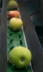 apple conveyor belt