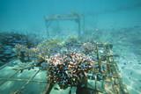 Coral regeneration poster