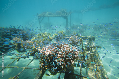 Leinwanddruck Bild Coral regeneration