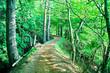 新緑のハイキング道