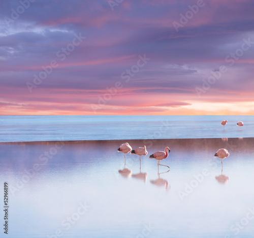 Flamingo © Galyna Andrushko
