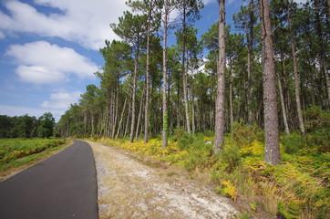piste cyclable en forêt - landes