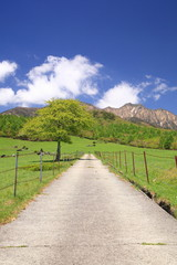 Straight road in meadow and Mt. Yatsugatake