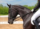 Dressage horse portrait
