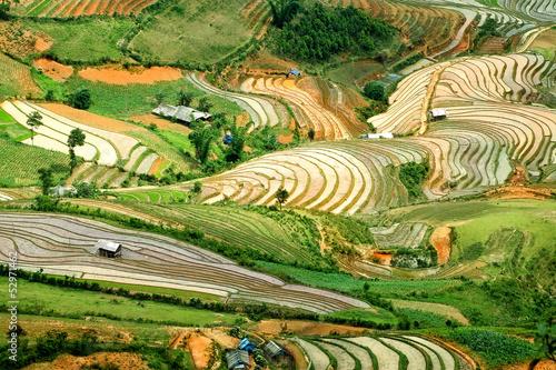 obraz lub plakat Tarasy ryżowe w północnym Wietnamie