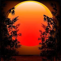 Bamboo on Sunset-Bambu nel Tramonto