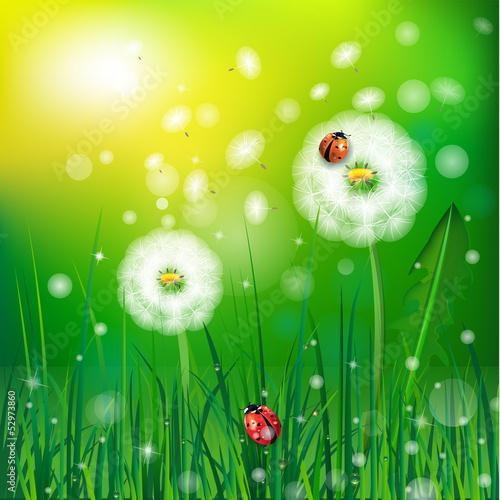 grass and ladybug