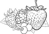 berry fruits illustration for coloring book
