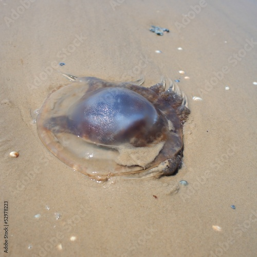 Jellyfish on the sand