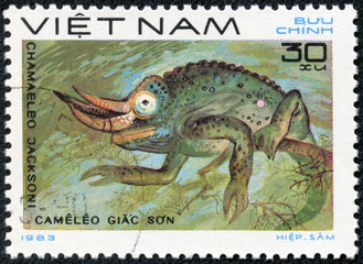 stamp printed in VIETNAM shows a Chamaeleo jacksoni