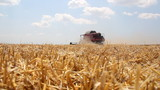 Wheat harvest, Combine in action