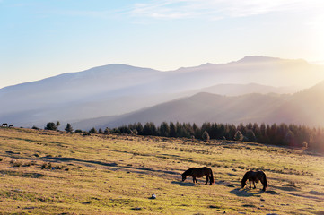horses at the morning on mountains with beautiful light