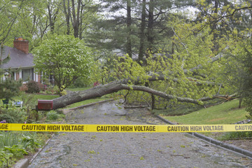 Tree and High Voltage Wires Down