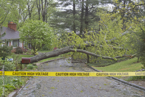 Storm Tree and High Voltage Wires Down