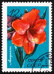 Postage stamp Russia 1971 Belladonna Lily, Amaryllis