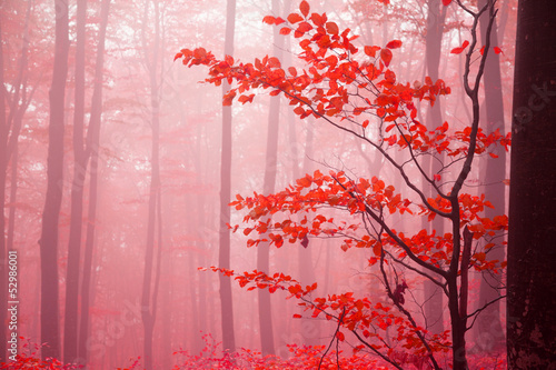 Foggy autumn day into the forest - 52986001