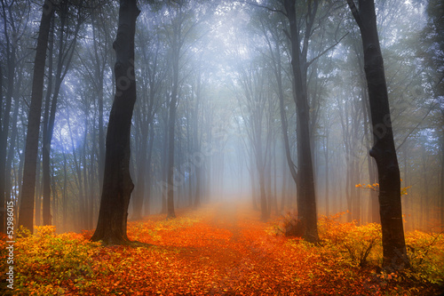 canvas print picture Foggy winter day into the forest