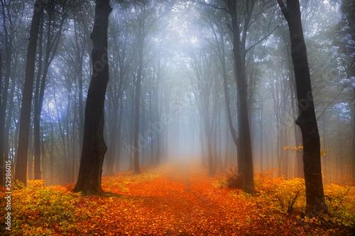 mglisty-zimowy-dzien-w-lesie