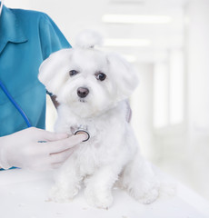 Vet with small puppy