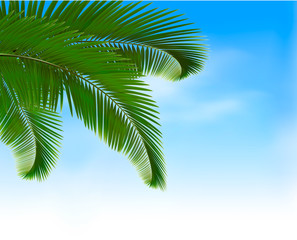 Palm leaves on blue background. Summer holidays concept.