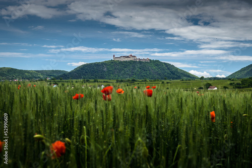 Poppies in the wheat canopy, in background Monastery Goettweig