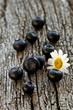 Heidelbeeren auf Holz mit einer Margerite