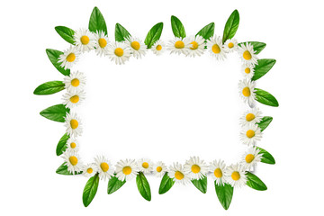 Frame: daisies and green leaves